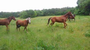 ジオファーム馬1